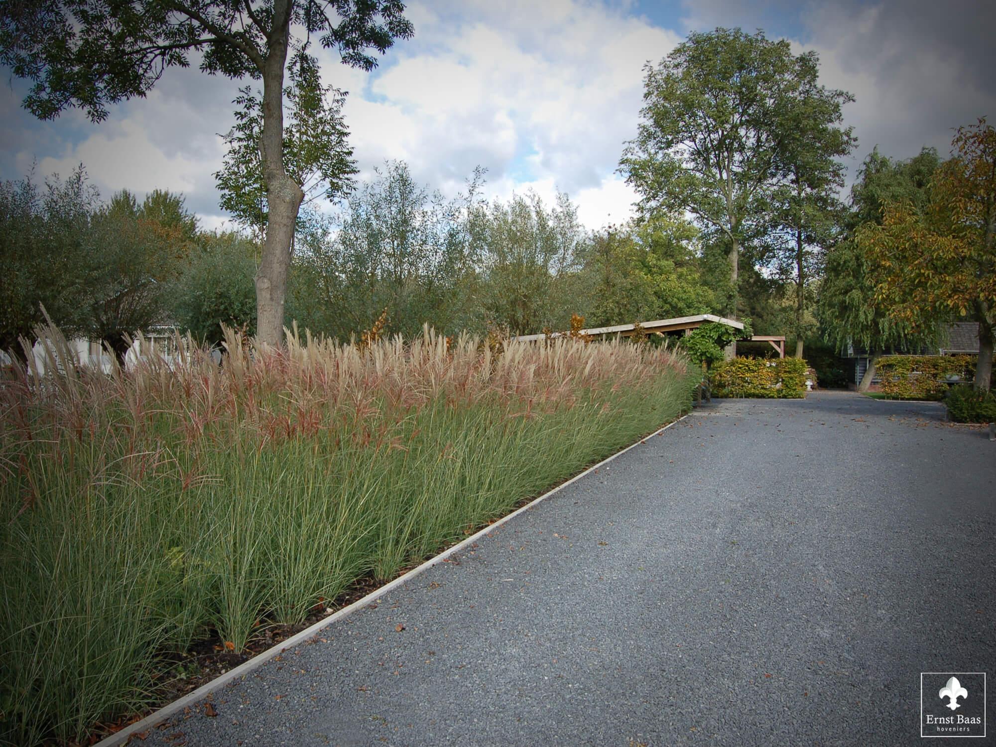 Miscanthus In Landelijke Tuin Met Historische Bomen Ernst Baas