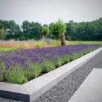 Verhoogde lavendel border