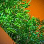 Daktuin kleurt mee met omgeving