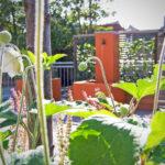 Daktuinen met waterornament